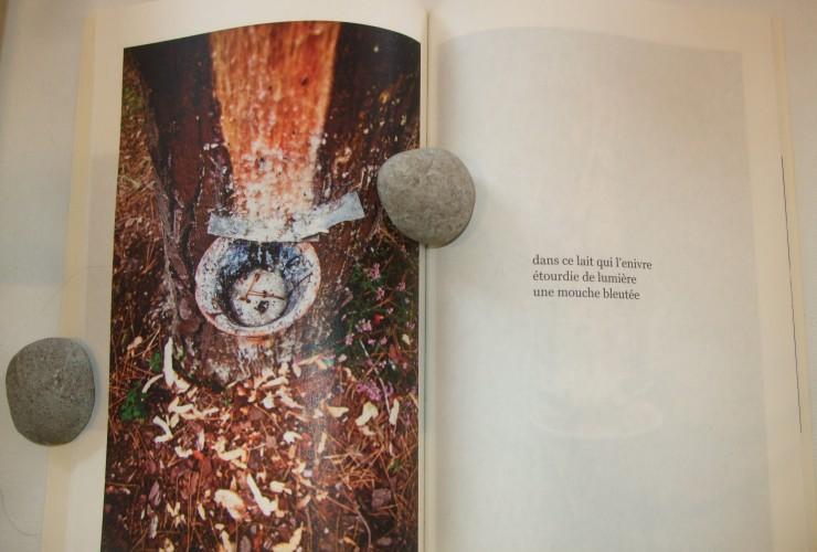 Extrait de «Au pied de mon arbre», Christian Marsan & Frédéric Méheut